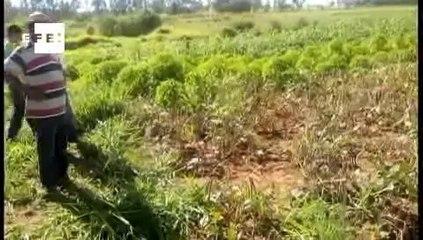 Governo fortalece agricultura familiar com programa de aquisição de alimentos