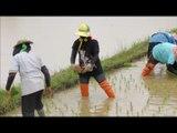 sur la route - une plantation de riz - 11 août 2013