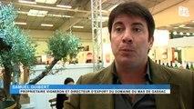 Viticulture : Le Languedoc-Roussillon exporte plus vers les Etats-Unis et moins vers la Chine