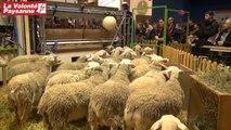 SIA 2014 : les éleveurs Roquefort impliqués