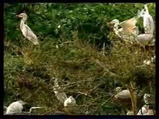 Prehistoric park-episode 4-part1