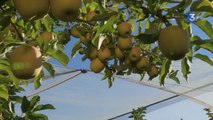 SIA 2014 : Clip pomme des Alpes
