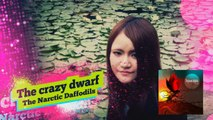"Video News Spin-off#20 The Narcotic Daffodils""The crazy dwarf"""