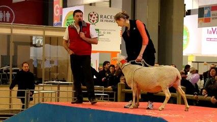 2014-03-Salon Agriculture-Les races ovines du Massif Central