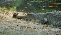 Wildlife India Tour, Wildlife Tour Packages, Wildlife Holiday Packages, Wildlife Travel, Wildlife Journey,