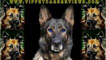 Pet Care The German Shepherd  Dog Breed