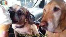 Des chiens bien élevés se font un petit Macdo