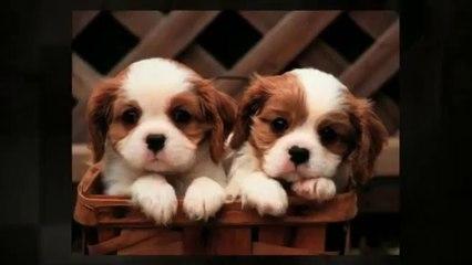 Edita Kaye with Adorable Puppies