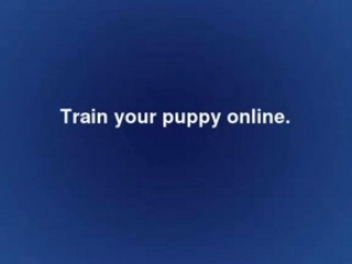 Puppy Training Online
