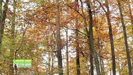Dynamique des forêts du Parc naturel régional des Vosges du Nord