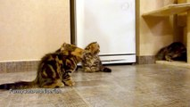 So cute Kittens playing with Soap Bubbles !! Adorable cats...
