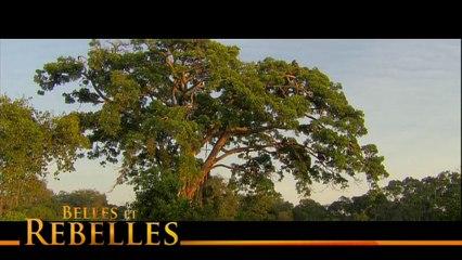 BA BELLE ET REBELLES-141113