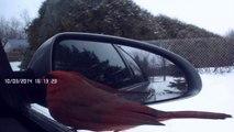 Un Cardinal mâle se regarde dans le rétroviseur de mon auto et pense voir un autre mâle, il grimpe sur le rétroviseur et cherche l'autre mâle...Superbe oiseau.