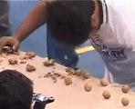 Casser 155 noix avec sa tête en 1 min... Nouveau record du monde... Débile!
