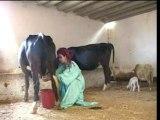 Morocco arabic music chaabi maroc Jadba