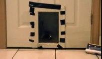 Poisson d'avril Cat Prank - Saran Wrap chat