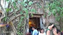 Temple within a Tree – Wat Bang Kung