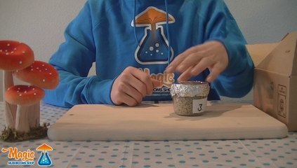 Grow Magic Mushrooms with PF Tek instructions for simple