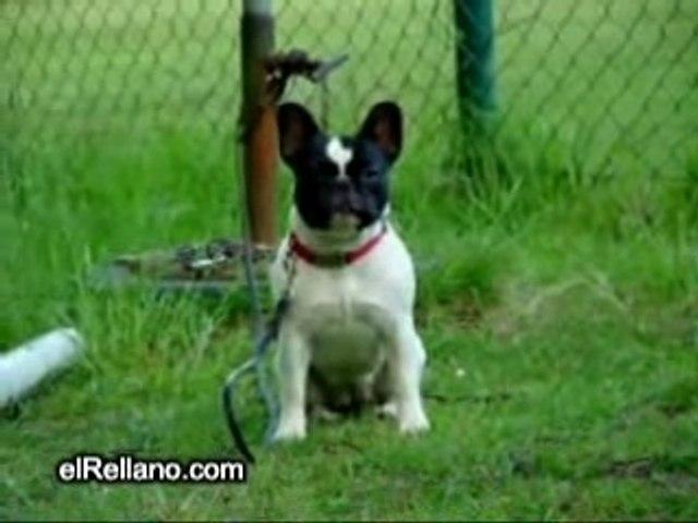 Strano cane