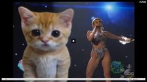 REview :Miley Cyrus - Wrecking ball live American Music Awards AMA's Here kitty  Miley Cyrus