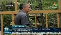 Agricultura urbana en Colombia una muestra de lucha y soberanía