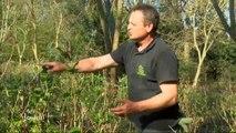 Beau temps : Les bons gestes pour son jardin (Vendée)