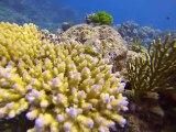 Australie- Queensland: Plongé sur la Grande Barrière de Corail II