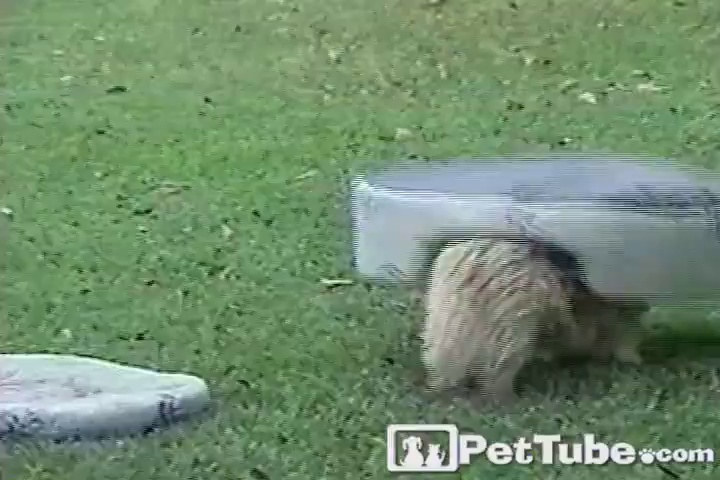Dog Flips Out for His Bed