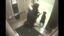 Dog's Leash Gets Caught In Elevator Doors 2014 - www.copypasteads.com