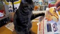 Patte folle : un chat complètement taré!