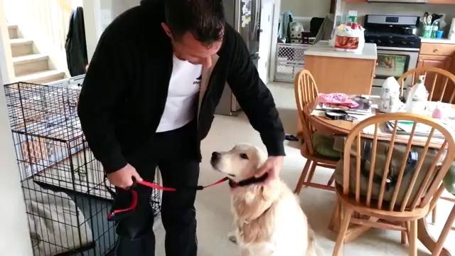An Amazing Dog Training Collar