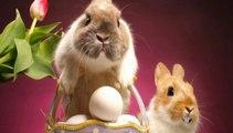 Zajace na Wielkanoc 2014