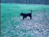 Yok au bois bois petite musique ou comment un chien terrorisé devient un dominant rigolo.