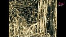 Les moissons d'autrefois en Poitou-Charentes