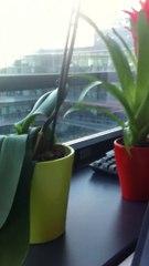 Plantes_Labo