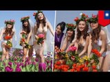 Hot Asian bikini models spread their tulips! Also, a flower festival or something