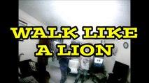 Mucho Bueno #4 - Walk like a Lion - Faya Burning ft. Camron One-Shot