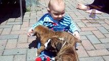Bébés et chiens qui jouent comme des p'tits fou - Compilation adorable!