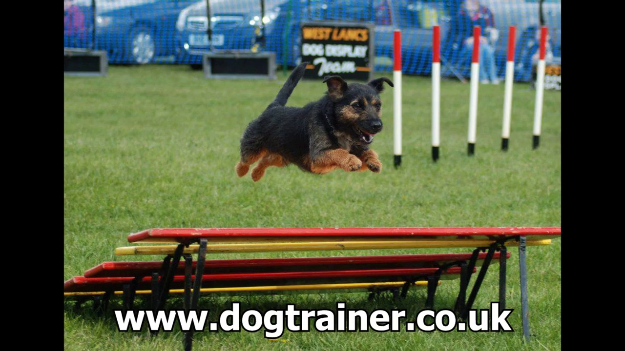 Puppy, Dog Training Classes LIverpool | www.dogtrainer.co.uk