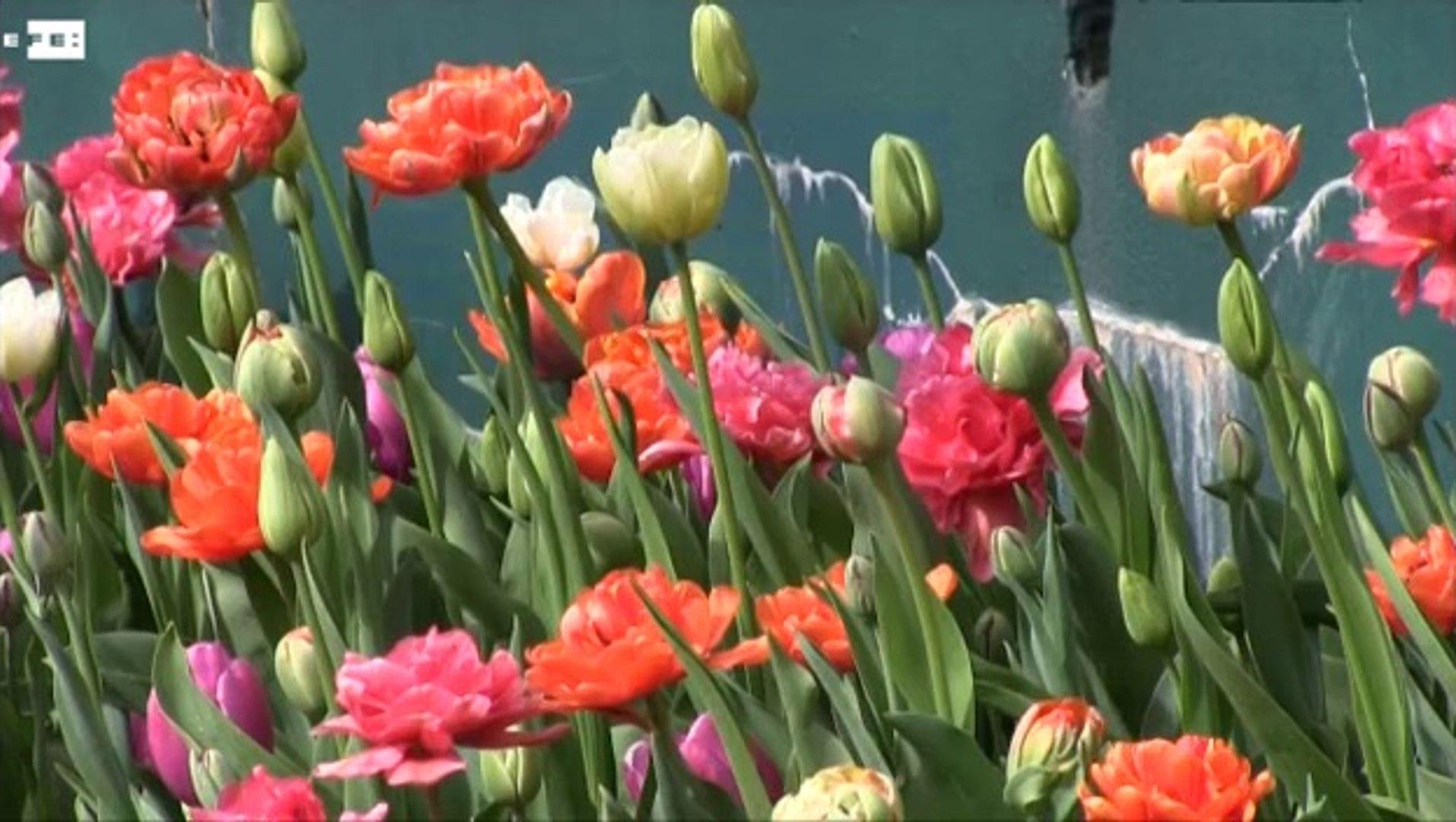 Las flores invaden el castillo de Groot-Bijgaarden en primavera