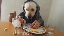 Canuomo - Il cane che mangia a tavola con le posate ;)