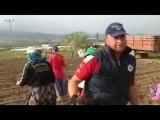 Geyve Bayat Köyü Gül Fidesi Dikimi