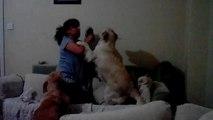 Un chien protège un enfant battu