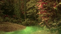 Hypnotic Soundscapes -- Forest Deeps Soundscape