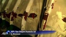 Un navire Sea Shepherd entre en collision avec un baleinier japonais