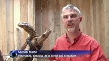 L'arrivée de bébés dragons de Komodo dans un parc zoologique français