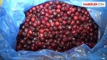 Dondurulmuş Meyve İhracatı, Ekonomiye 25 Milyon Lira Katkı Sağlıyor