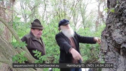 Bürger verhindern Baumfällung in Hainburg (HD)