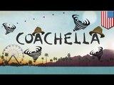 Coachella 2014: big names, big hats and bigger winds