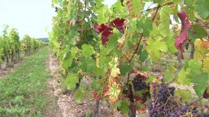 Château de Minière - Au coeur des terroirs - Bourgueil - sur la Tv de la vigne et du vin @edonys